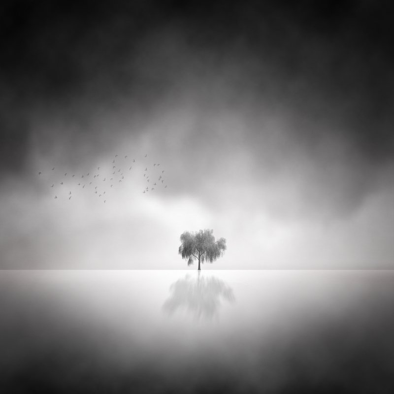 Fine Art  Lonely Tree photo preview