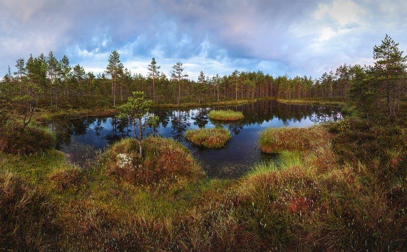 болото, ленобласть, фототур, Ленинградская область,  \