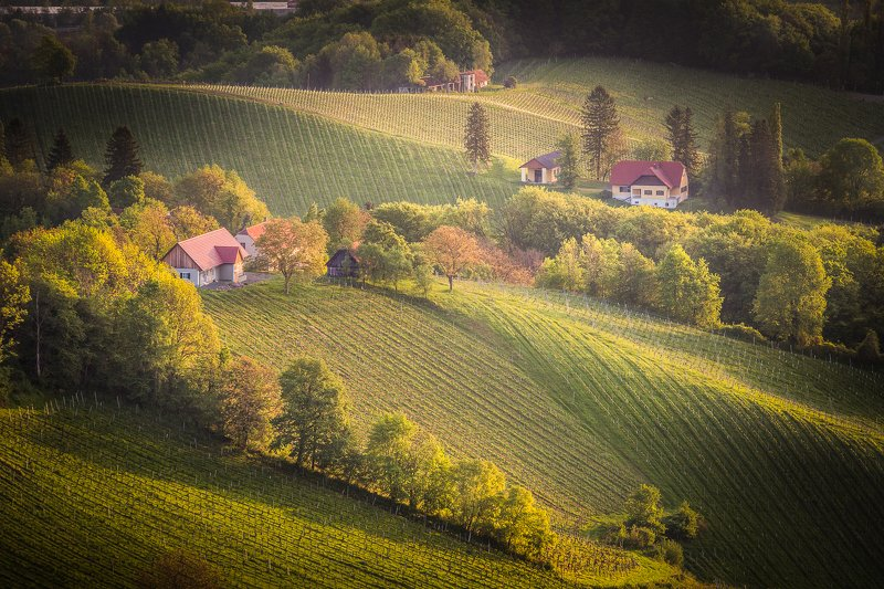 slovenia, travel, sunrise, adventure, fields, vineyards Somewhere in the Slovenian vineyardsphoto preview