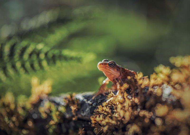 лягушка лето лес папоротник макро photo preview