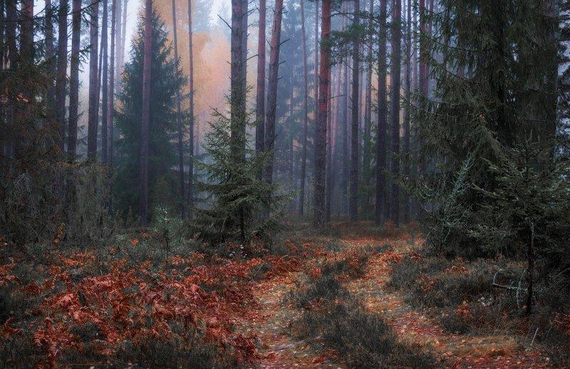 утро, лес, туман, осень, Про туман в лесуphoto preview