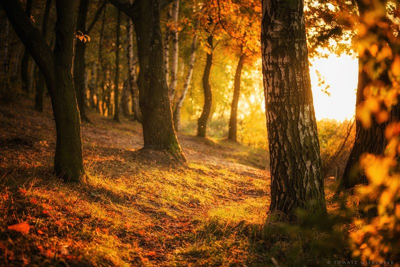 trees, poland, polish, landscape, sunrise, sunset, colours, autumn, awesome, amazing, adventure, travel, beautiful, afternoon, light Light of the autumnphoto preview