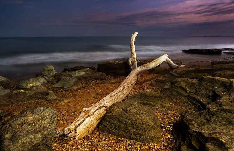 коряга, море, ночь, лунный свет, побережье  Каспийское море и корягаphoto preview