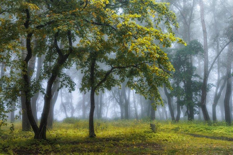 осень сентябрь лес туман утро деревья трава Занавесилось утро туманомphoto preview