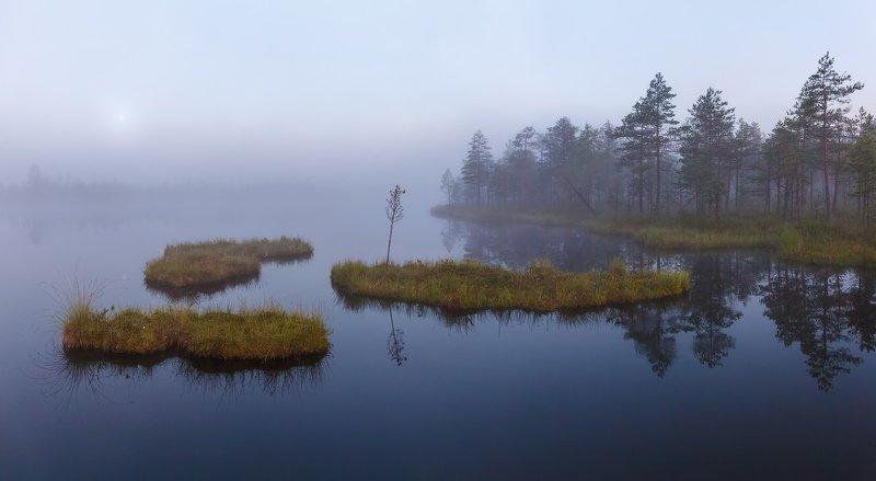 болото, плавающие острова, сплавина \