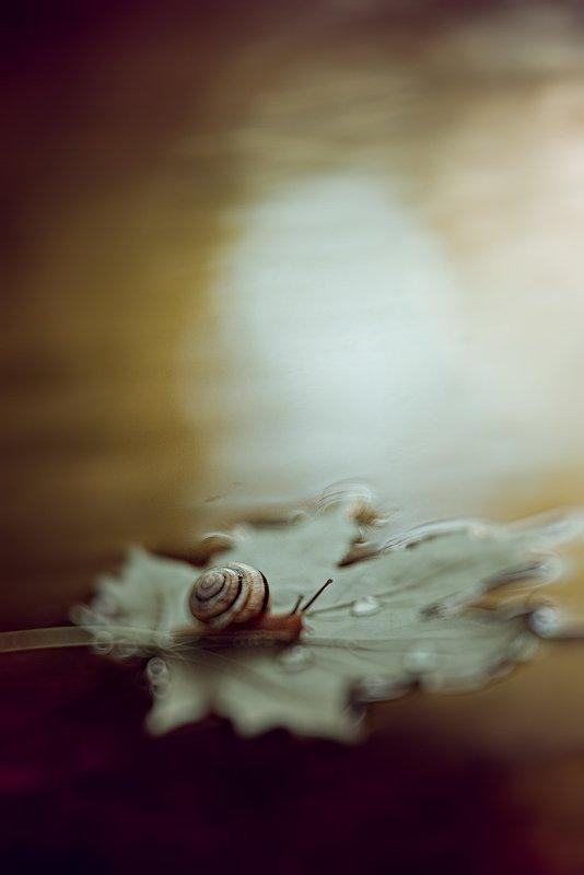 украина, коростышев, природа, макро, макро истории, осень, листик, улитка, кленовый, плыть, путь, любовь, жизнь, волшебство, сон, боке, фон, желтый, фотограф, украина, мечта, душа, раствориться, исчезнуть, растаять, \