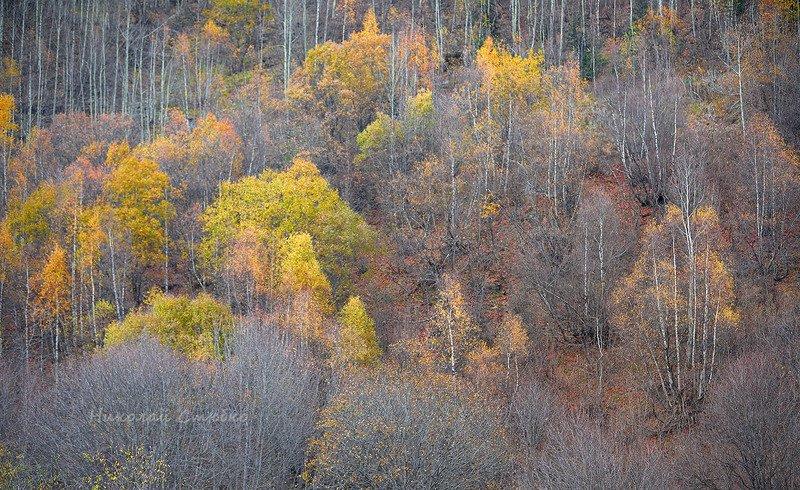 кавказ горы осень деревья Палитра цвета \