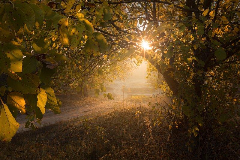 nature sun morning autumn fog mist dreamy The golden gatephoto preview