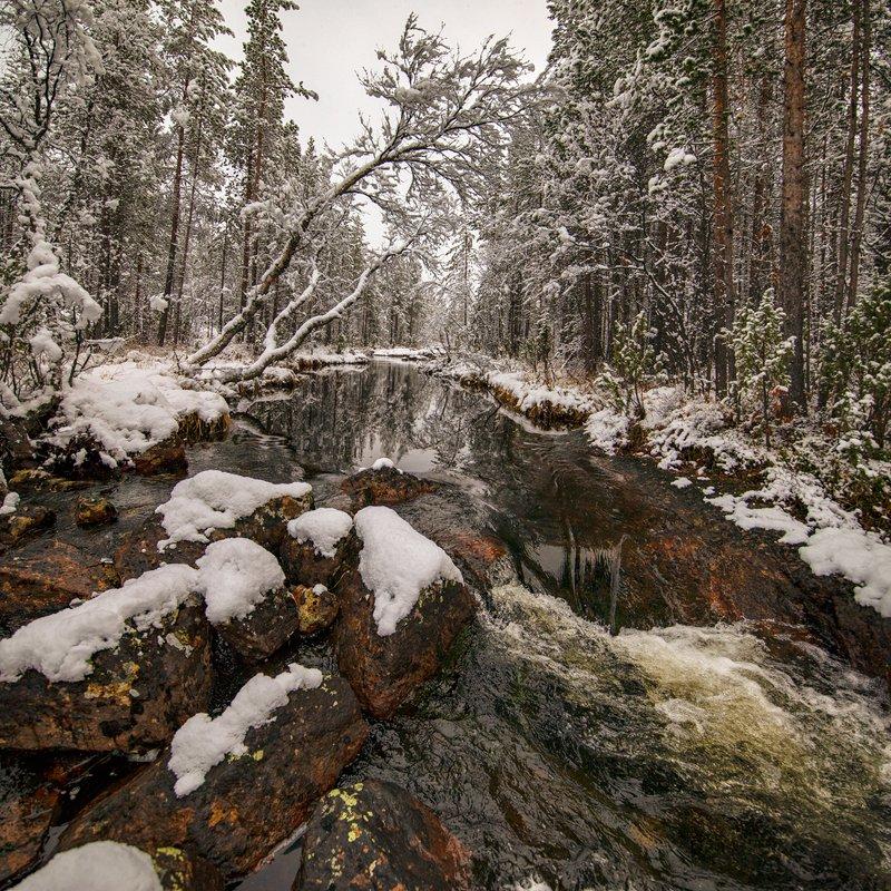 Колыбельная засыпающему лесу ...photo preview