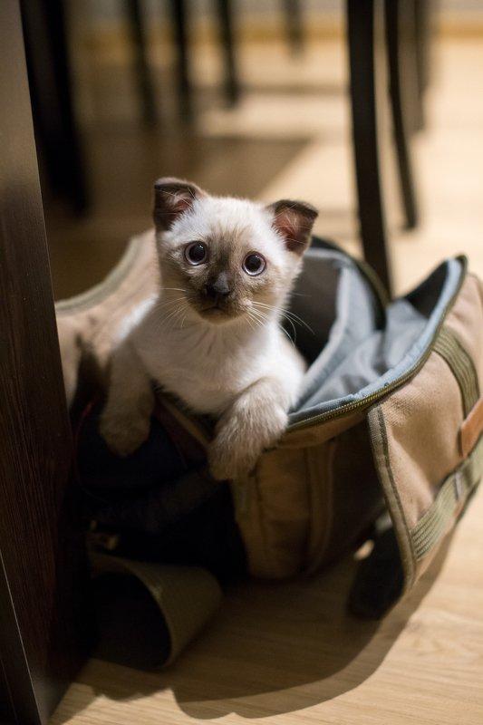 Кот фотографаphoto preview