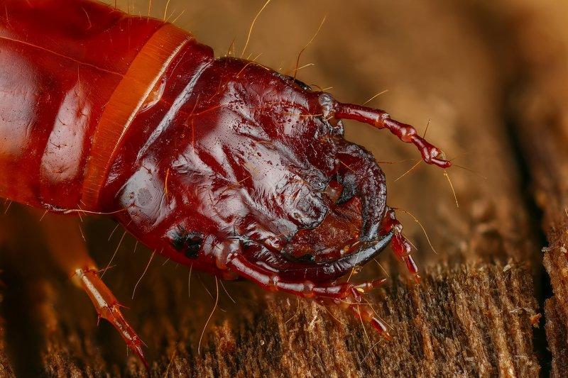 жук макро природа личинка цвет оранжевый коричневый Монстрphoto preview