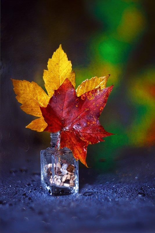 helios-44m, manual lens, мануальная оптика, beautiful, красивый, moment, момент, still life, натюрморт, осенний, autumn, осень, leaves, листья, maple, кленовые, Разноцветные сны октября…photo preview