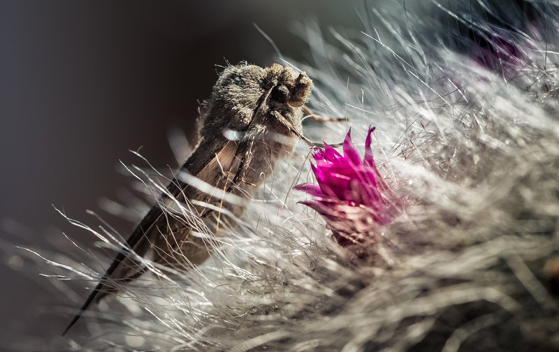 природа, макро, цветы, кактус, бабочка Аленький цветочекphoto preview