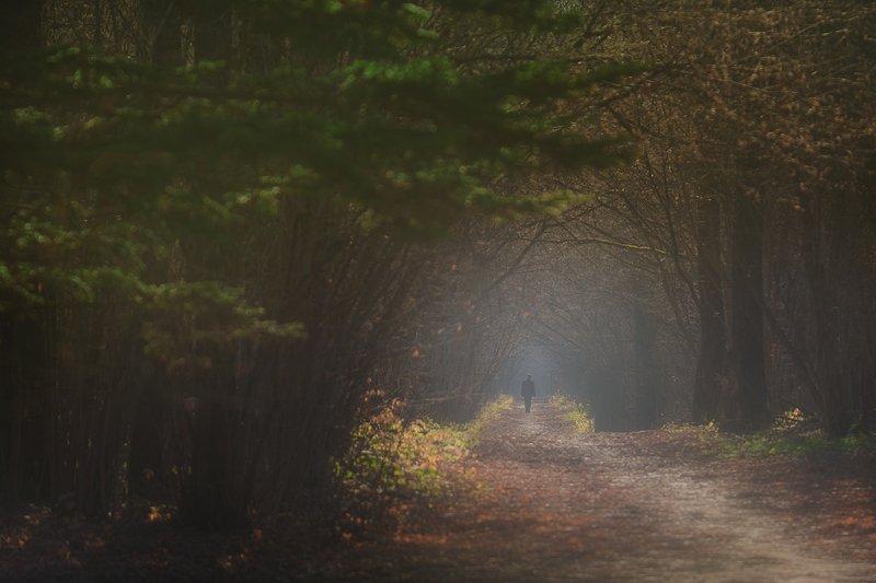 Утро в Ботаническом садуphoto preview