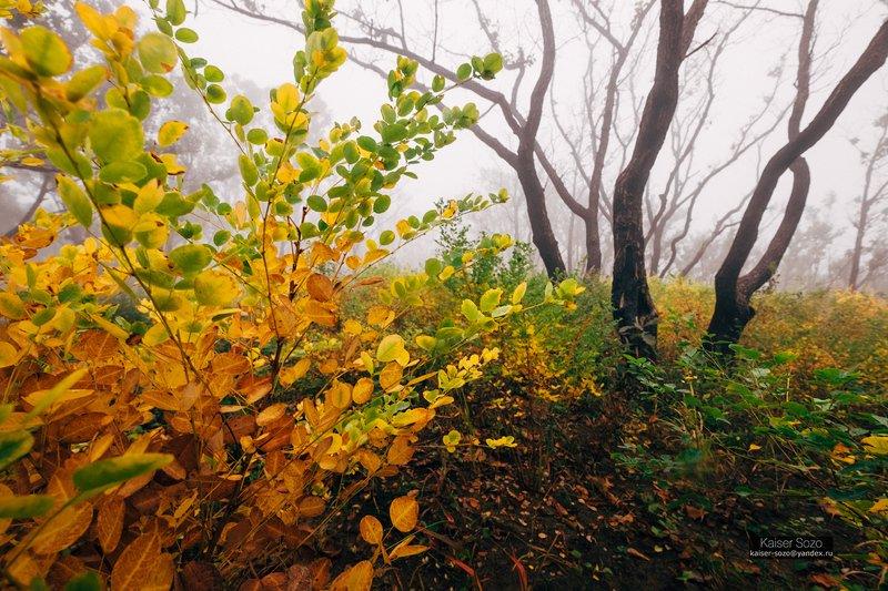 россия, приморье, приморский край, бухта льва, туман, лес, золотая осень photo preview