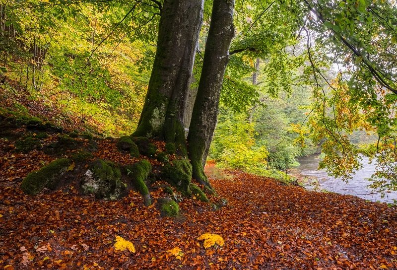 forest, autumn, tree, leaves, лес, природа, осень Autumn forestphoto preview