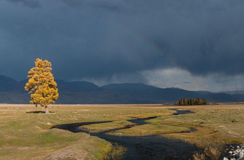 Курай после дождя.photo preview
