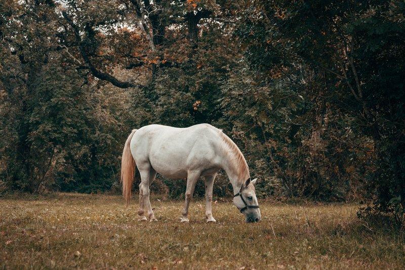 лошади, словения, пейзаж, липица, осень Липицианыphoto preview