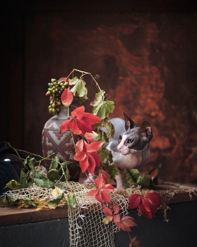 #сфинкс #кошки #домашние #животные в натюрморте #портрет Вот и отцвёл виноград.. коты погрустнели и прячутся в последних красках этого сезона...photo preview