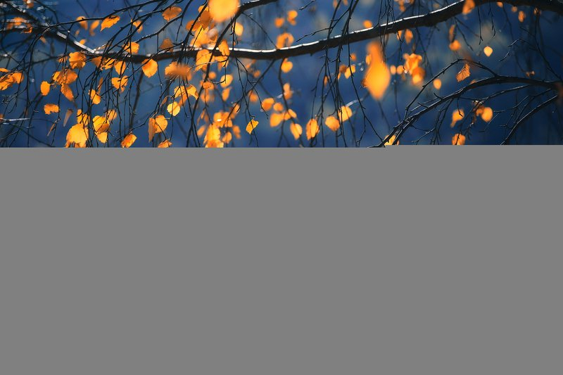 nature, autumn, yellow, red, colors, leaf, leaves, trees, sky, blue, outdoor, photography The best of Octoberphoto preview