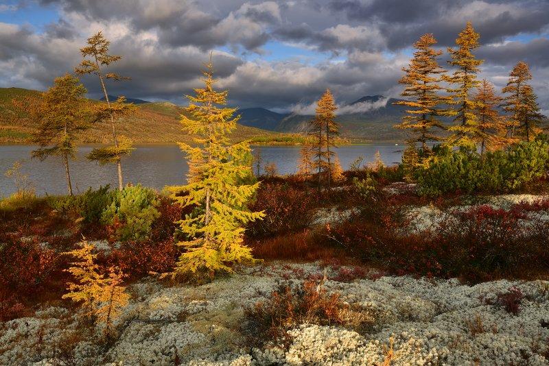 Джек и золотая осень...photo preview