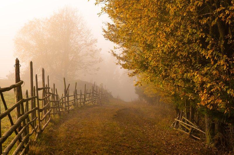 карпаты., осень., туман Карпаты. Дорога в туман...photo preview