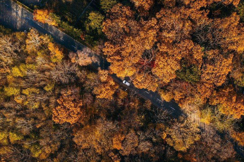 аэросъемка, владивосток, приморье, лес, осень, оранжевый, mavic pro 2 Щедрый октябрьphoto preview