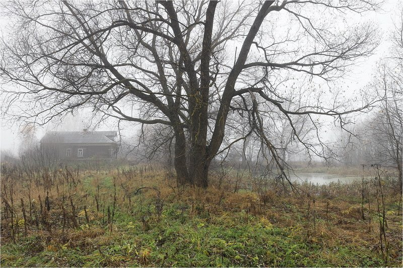 осень, октябрь, дом, деревня, дерево,туман, пруд, Одно сырое и туманное утро.photo preview