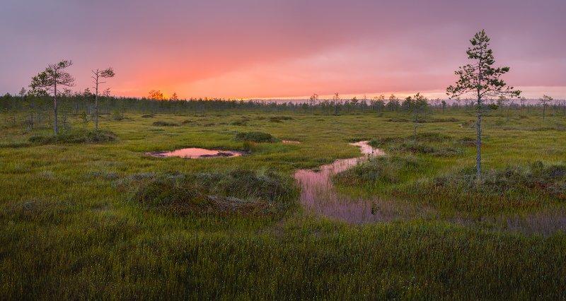 болото, сплавина, ленобласть, ленинградская область \