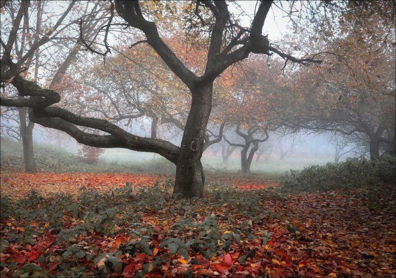 утро, осень, деревья, Осенние силуэтыphoto preview