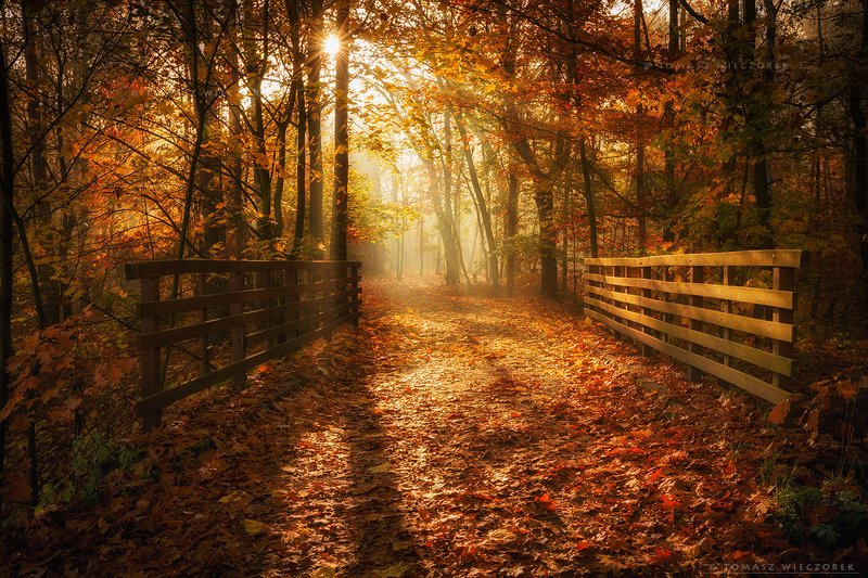 forest, poland, polish, landscape, sunrise, sunset, colours, autumn, awesome, amazing, adventure, travel, beautiful, morning, bridge, sun, leaves Entrance to the autumn paradisephoto preview