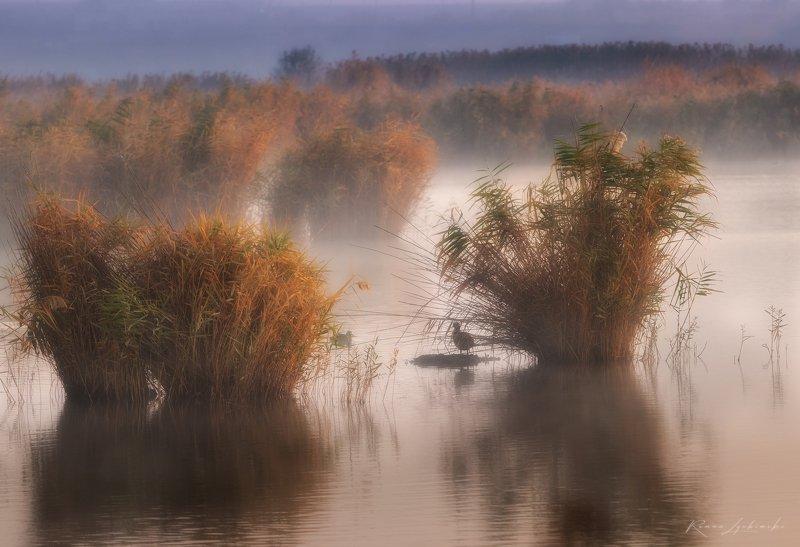крым, пейзаж, феодосия, утро Их было 2е на рассвете photo preview