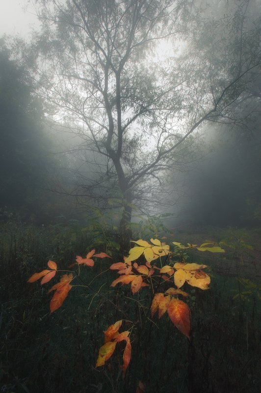 forest nature autumn fog moody Scent of autumnphoto preview