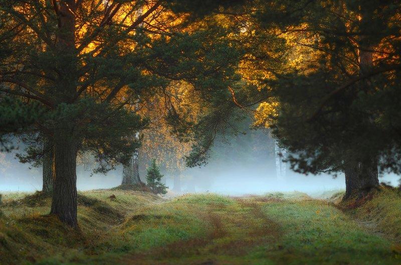 павловскийпарк, павловск, питер, пейзаж, природа, рассвет, павловский, туман Лучик)photo preview