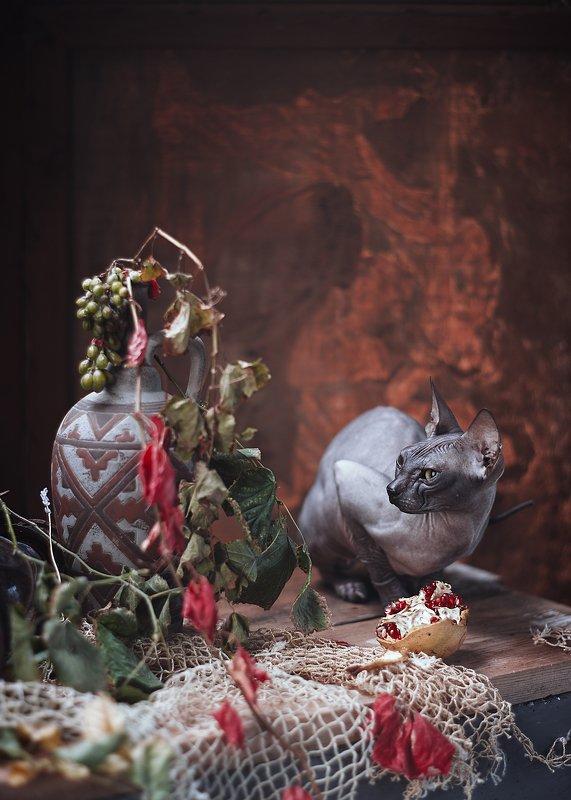 #сфинкс #кошки #домашние #животные в натюрморте #портрет Кошка и кувшинphoto preview