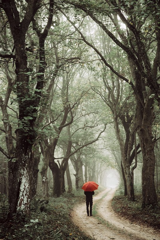 ходить walk forest woods trees road magic miasty foggy dranikowski path fall alley red umbrella ходитьphoto preview
