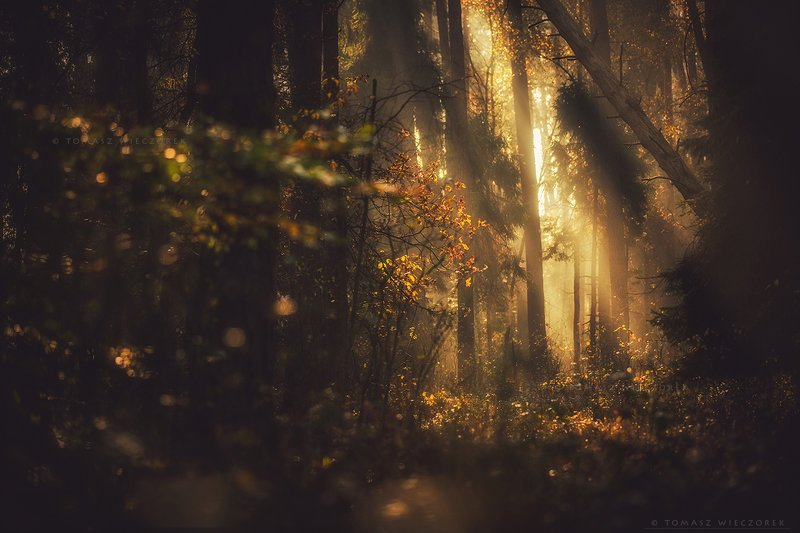 forest, poland, polish, landscape, sunrise, sunset, colours, autumn, awesome, amazing, adventure, travel, beautiful, morning, trees, light, leaves In the middle of a forestphoto preview