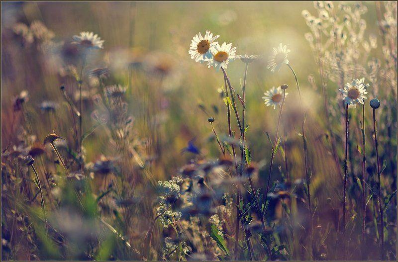 Полевые цветы.photo preview