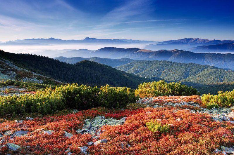 карпаты, горы, осень, черногора, горганы украина Прощание с осеньюphoto preview