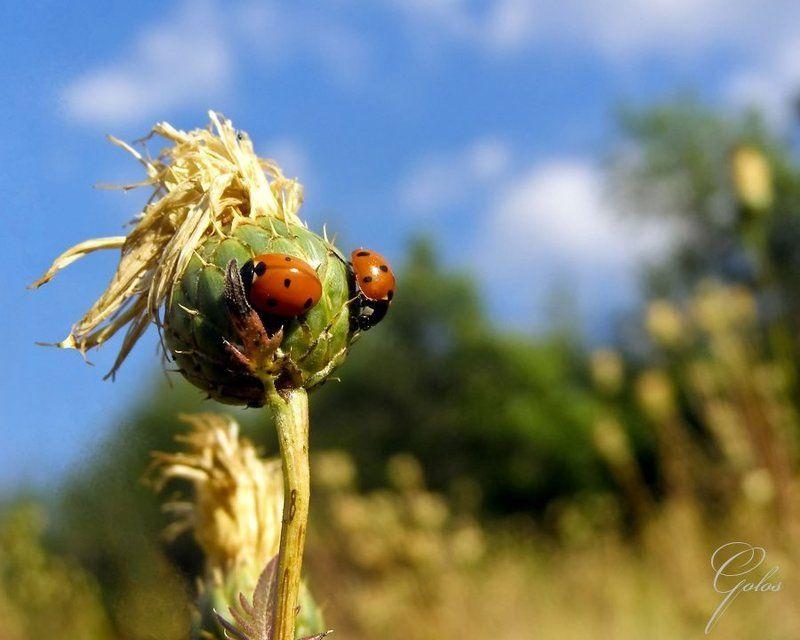 степь, ветер, божьи коровки, хортица Степной ветерphoto preview