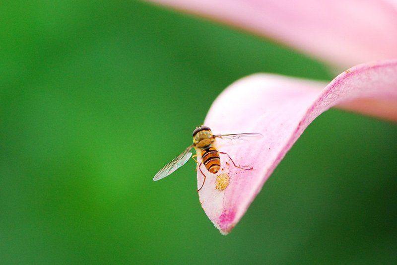 лето ,цветы ,лилия ,солнце, лето ,насекомые История одного полетаphoto preview