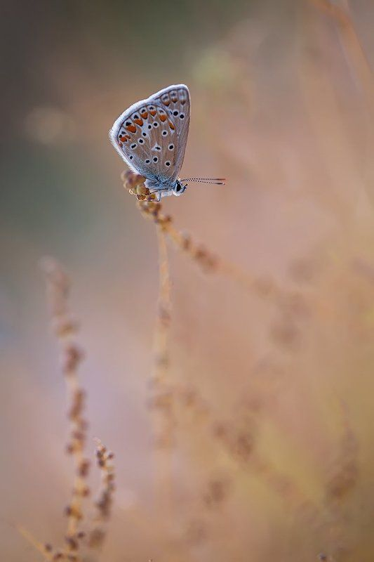 lepidoptera, canon, eos, 100mm l is, 5d mkii Polyphoto preview