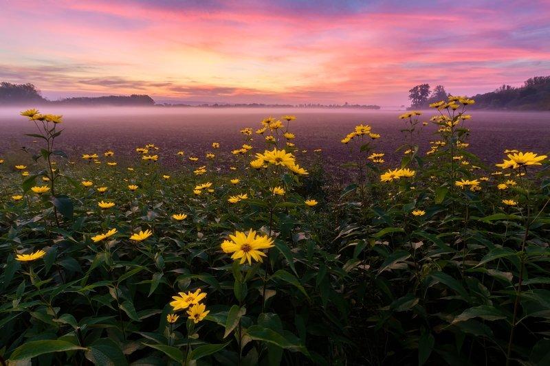 landscape, poppy, field, sunrise, fog Autumn Morningphoto preview