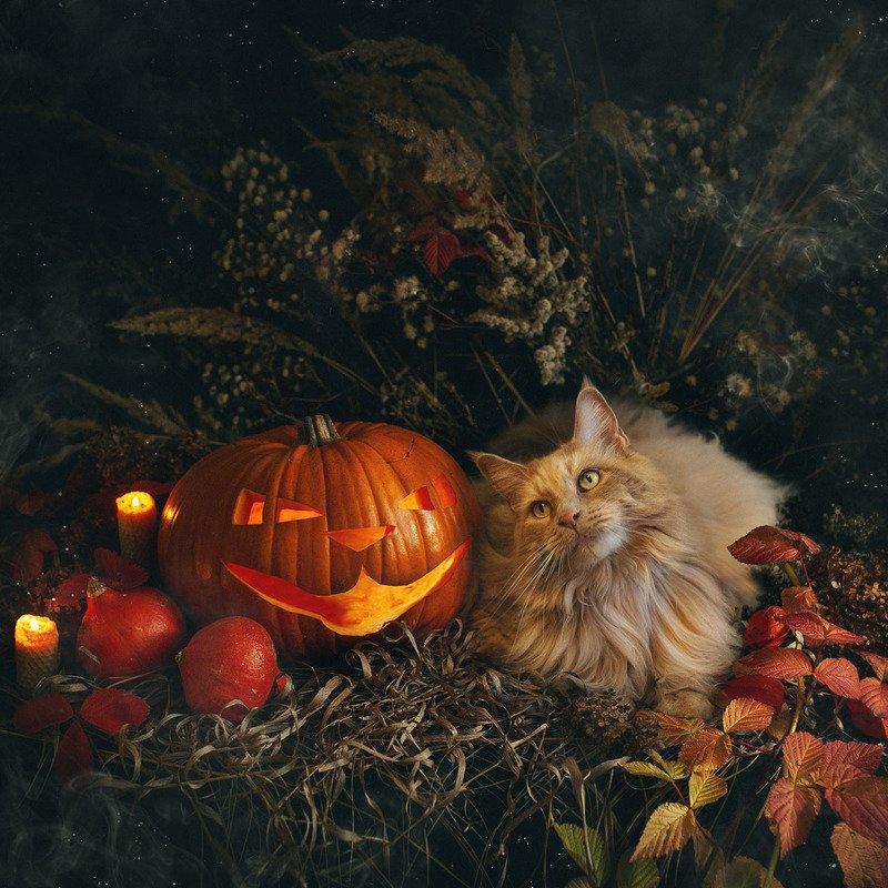 хэллоуин, тыква, кот, натюрморт Тыковки к Хэллоуинуphoto preview
