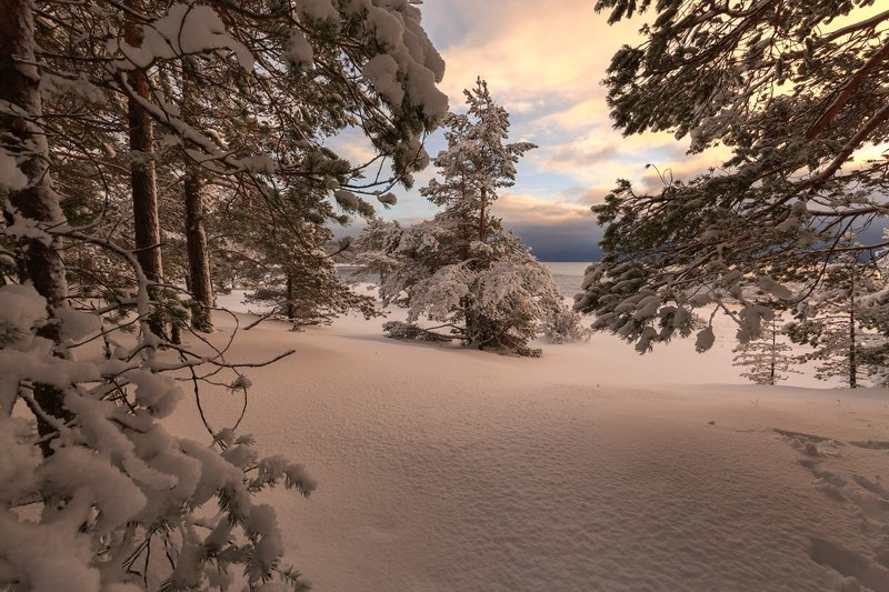 пейзаж,природа,карелия,зима,лес \