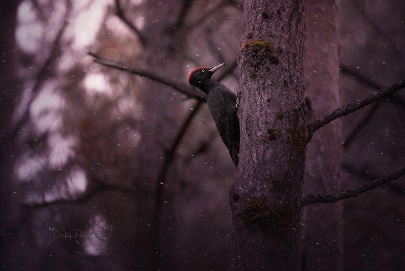 природа, лес, животные, птицы Зима стучитсяphoto preview