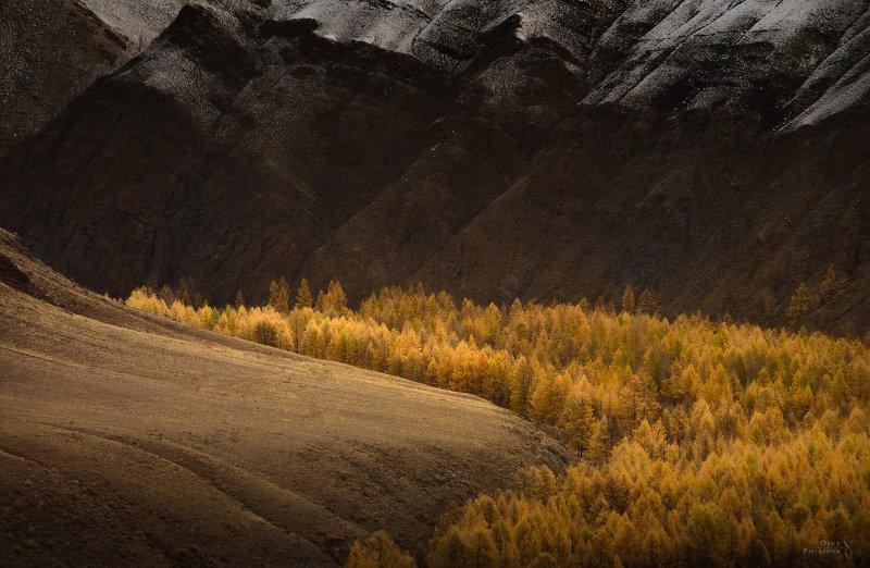 курайская степь, чуйская степь, алтай, золотая осень Золотая осень Алтаяphoto preview