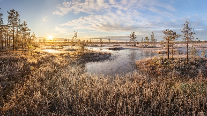 болото, ленинградская область, ленобласть, фототур, изморозь, восход, ноябрь \