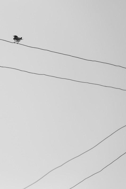 mohib ali photography Lonelinessphoto preview