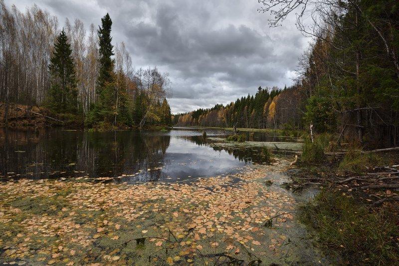 осень,река,небо,тучи,облака,листья,лес хмурая осеньphoto preview